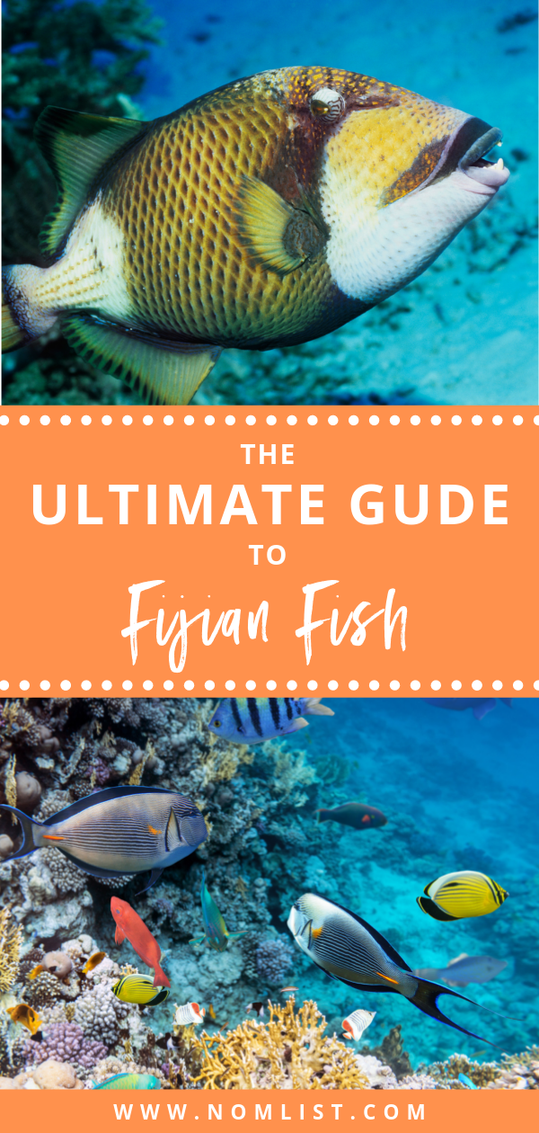 Fiji is one of the most popular tropical destinations. It's synonymous with pristine water, colorful corals, and mesmerizing schools of fish. In such a place though you can also expect to find some seafood goodness. And indeed, if you love seafood, Fiji could be your paradise. #fish #fiji #fijianfood #fijianfish #allaboutfish #fishrecipes #fishfood #wildfish #fishing #catchingfish #fishies